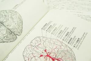 認知症-脳